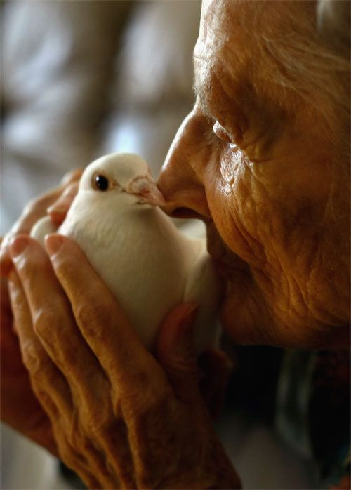 LAKEWOOD, CO - OCTOBER 07: Terminally ill patient Jackie Beattie, 83, holds a dove on October 7, 2009 while at the Hospice of Saint John in Denver, Colorado. The dove releases are part of an animal therapy program designed to increase happiness, decrease loneliness and calm terminally ill patients during the last stage of life. The non-profit hospice, which serves on average 200 people at a time, is the second oldest hospice in the United States. The hospice accepts patients regardless of their ability to pay, although most are covered by Medicare or Medicaid. End of life care has become a contentious issue in the current national debate on health care reform. (Photo by John Moore/Getty Images) *** Local Caption *** Jackie Beattie